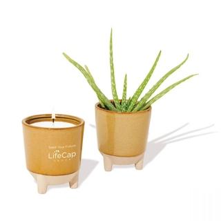 PJL-6277 Ensemble de chandelle et plante à faire pousser